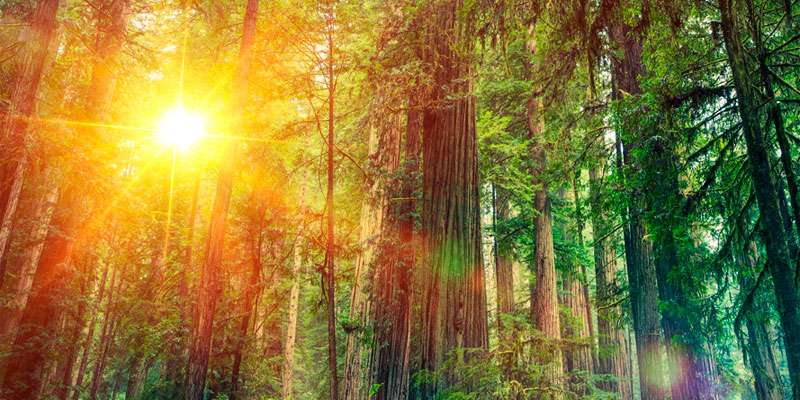 Картинки с днем лесной промышленности
